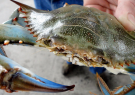 Try Your Luck at Crabbing
